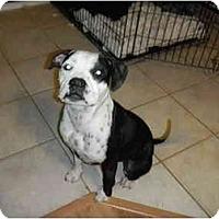 Adopt A Pet :: Tiny - Mesa, AZ