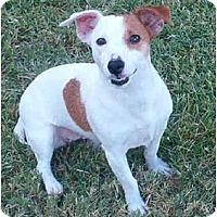 Adopt A Pet :: BOO - Phoenix, AZ