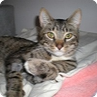 Adopt A Pet :: Pickle - Vancouver, BC
