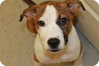 Terrier (Unknown Type, Medium) Mix Puppy for adoption in Covington, Louisiana - Samoa