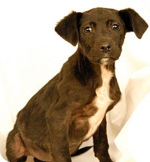 Labrador Retriever Mix Puppy for adoption in Newland, North Carolina - Meister