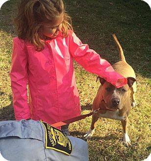 Pit Bull Terrier Mix Dog for adoption in Bloomfield, Connecticut - Moriah