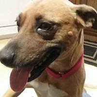 Adopt A Pet :: Hazel - Jetersville, VA