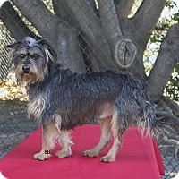 Adopt A Pet :: Scruffy - Santa Barbara, CA