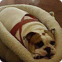 Adopt A Pet :: Brutus (Courtesy Listing) - Spotsylvania, VA