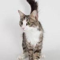 Adopt A Pet :: Khloe - Savannah, GA