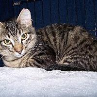 Adopt A Pet :: Russel - Ashland, VA