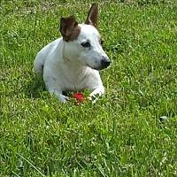Adopt A Pet :: Louie - Eastpointe, MI