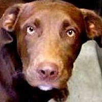 Adopt A Pet :: DUTCH(ADORES CHILDREN!!) - Wakefield, RI