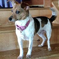 Adopt A Pet :: Rudy - Alexandria, VA