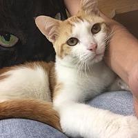 Adopt A Pet :: Reedley - Los Angeles, CA
