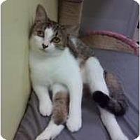 Adopt A Pet :: Verbal - Fort Lauderdale, FL