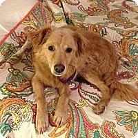 Adopt A Pet :: Bubbles - Foster, RI