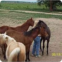 Adopt A Pet :: Apollo - Pueblo, CO