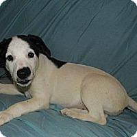 Adopt A Pet :: Mercedes - Bel Air, MD