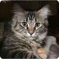 Adopt A Pet :: Alanis - Cincinnati, OH