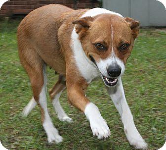 Collie Mix Dog for adoption in Warner Robins, Georgia - Cherry