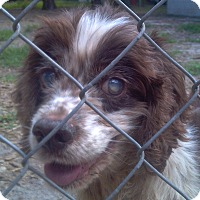 Adopt A Pet :: Emma - Orange Lake, FL
