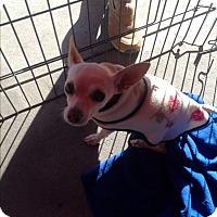 Adopt A Pet :: Daisy - North Hollywood, CA