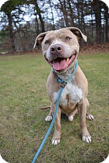 Terrier (Unknown Type, Medium) Mix Dog for adoption in Brookhaven, New York - Smith
