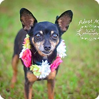 Adopt A Pet :: Trix - Fort Valley, GA