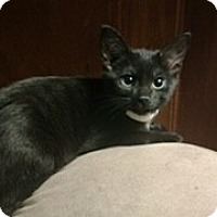 Adopt A Pet :: Bailey - McHenry, IL