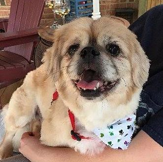 Pekingese Mix Dog for adoption in Virginia Beach, Virginia - Rocky
