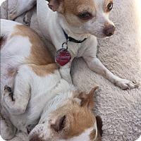 Adopt A Pet :: Radar & Chico - Van Nuys, CA