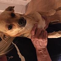 Adopt A Pet :: Ellie - Denver, CO