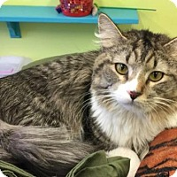 Adopt A Pet :: Buddy - Evergreen, CO