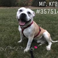 Adopt A Pet :: Mr. Krabs - Stray - Wilkes Barre, PA