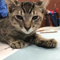 Adopt A Pet :: Zak - Miami, FL