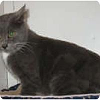 Adopt A Pet :: Hallie - Shelton, WA