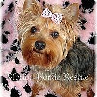 Adopt A Pet :: Lily May - Palm City, FL