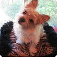 Adopt A Pet :: Captain - Conroe, TX
