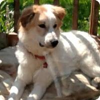Adopt A Pet :: Charlie- in MA - Lee, MA