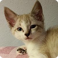 Adopt A Pet :: Kiva - Portland, OR