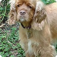 Adopt A Pet :: Trixie - Sugarland, TX