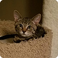 Adopt A Pet :: Chico - Cleveland, OH