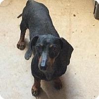 Adopt A Pet :: Fritz - Post, TX
