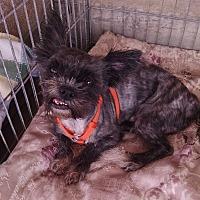 Adopt A Pet :: Leo - Woodstock, GA
