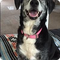 Adopt A Pet :: Lilly - Umatilla, FL