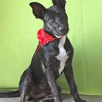 Adopt A Pet :: Sadie - Beaumont, TX