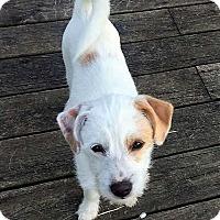 Adopt A Pet :: JJ - Sudbury, MA