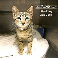 Adopt A Pet :: SHELLEY - Conroe, TX