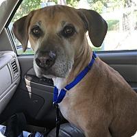 Adopt A Pet :: Charlie - Palm City, FL