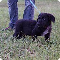 Adopt A Pet :: Spencer - Oviedo, FL