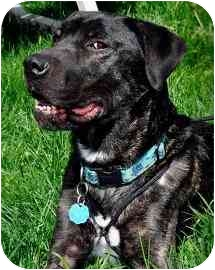 Patterdale Terrier (Fell Terrier) Mix Dog for adoption in Guelph, Ontario - Rudy