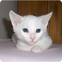Adopt A Pet :: Opal - Richmond, VA