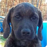 Adopt A Pet :: Waggs - Allentown, PA